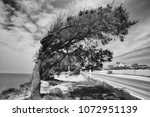 tree modify by wind  black and... | Shutterstock . vector #1072951139