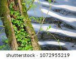 small plant and the pond | Shutterstock . vector #1072955219