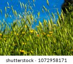 view of the nature  in the... | Shutterstock . vector #1072958171