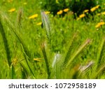 view of the nature  in the... | Shutterstock . vector #1072958189