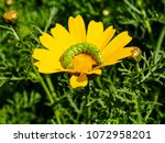view of the nature  in the... | Shutterstock . vector #1072958201