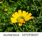 view of the nature  in the... | Shutterstock . vector #1072958207