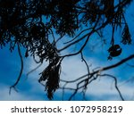view of the nature  in the... | Shutterstock . vector #1072958219