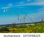 view of the nature  in the... | Shutterstock . vector #1072958225