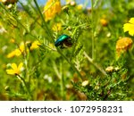 view of the nature  in the... | Shutterstock . vector #1072958231