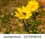 view of the nature  in the... | Shutterstock . vector #1072958255