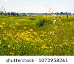 view of the nature  in the... | Shutterstock . vector #1072958261
