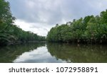 mangrove forest along the river ... | Shutterstock . vector #1072958891