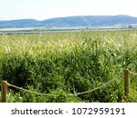 view of the nature  in the... | Shutterstock . vector #1072959191