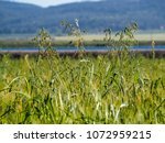 view of the nature  in the... | Shutterstock . vector #1072959215