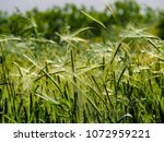 view of the nature  in the... | Shutterstock . vector #1072959221