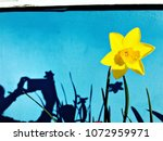 yellow daffodil narcissus... | Shutterstock . vector #1072959971
