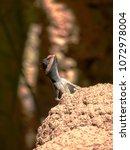 close up of lizard basking on... | Shutterstock . vector #1072978004