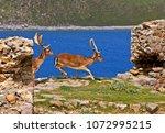 lemnos island  north aegean ... | Shutterstock . vector #1072995215