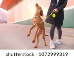 a dog and a girl walk around... | Shutterstock . vector #1072999319