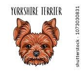 yorkshire terrier dog breed.... | Shutterstock .eps vector #1073030831