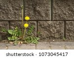 some weeds growing on a... | Shutterstock . vector #1073045417