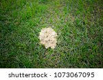 Dog Vomit Slime Mold Stock Photo
