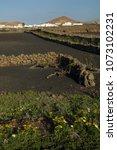 Small photo of Mancha Blanca. Tinajo. Lanzarote. Canary Islands. Spain.