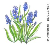 muscari   spring flowers ... | Shutterstock .eps vector #1073227514
