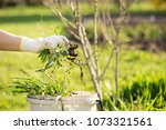 woman hand clearing  pulling... | Shutterstock . vector #1073321561