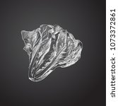 hand drawn lettuce sketch... | Shutterstock .eps vector #1073372861