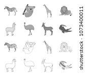lama  ostrich emu  young... | Shutterstock .eps vector #1073400011