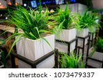 yucca  house plant in a pot.... | Shutterstock . vector #1073479337