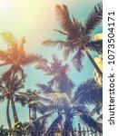 Summer palm tress