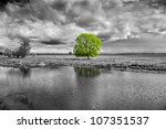 Black And White Landscape And...