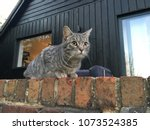 cat on wall. grey cat crouching ... | Shutterstock . vector #1073524385