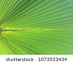 green tropical leaves... | Shutterstock . vector #1073553434