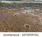 dead shrimp in pond | Shutterstock . vector #1073559761