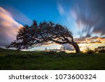 solitary tree bent by the wind... | Shutterstock . vector #1073600324