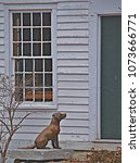 Small photo of West Cornwall, CT/USA- February 20, 2016: A vertical image of a bronze sculpture/statue of a dog poised to seek admittance into a white clapboarded country home.