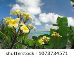 frangipani flowers with sunny... | Shutterstock . vector #1073734571