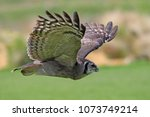 close up of a verreaux's eagle... | Shutterstock . vector #1073749214