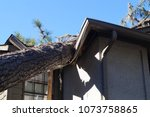 Roof Damage From Tree That Fel...