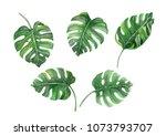 set of green monstera tropical... | Shutterstock . vector #1073793707