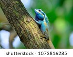 beautiful blue chameleon on the ... | Shutterstock . vector #1073816285