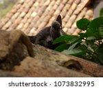 Beautiful Gray Cat Sleeping On...