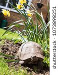 Small photo of Dorris the Tortoise in the Flower Bed