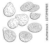 bergamot fruit graphic set... | Shutterstock .eps vector #1073998985