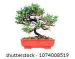 pine juniper bonzai on white...   Shutterstock . vector #1074008519