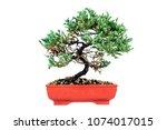 pine juniper bonzai on white...   Shutterstock . vector #1074017015