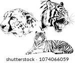 vector drawings sketches... | Shutterstock .eps vector #1074066059
