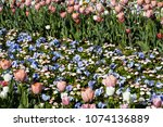 colorful flowerbed in the... | Shutterstock . vector #1074136889