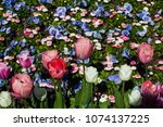 colorful flowerbed in the... | Shutterstock . vector #1074137225
