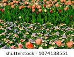 colorful flowerbed in the... | Shutterstock . vector #1074138551