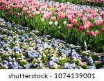 colorful flowerbed in the... | Shutterstock . vector #1074139001